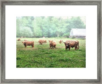 Cattle In The Mist Framed Print