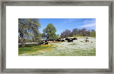 Cattle N Flowers Framed Print