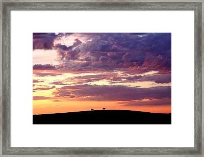 Cattle Ridge Sunset Framed Print