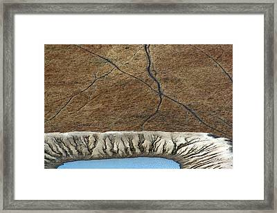 Cattle Tracks Framed Print by Tim Nichols