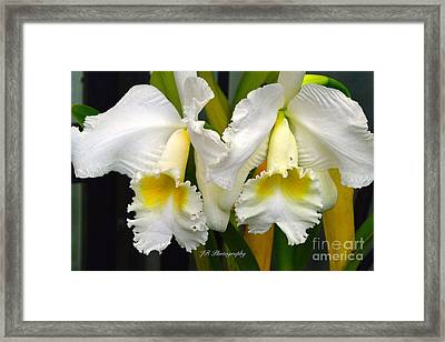 Cattleya And Nancy Gray Framed Print by Jeannie Rhode