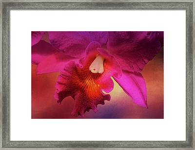 Cattleya Beauty Framed Print by HH Photography of Florida