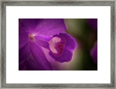 Cattleya Orchid- 2 Framed Print by Calazone's Flics