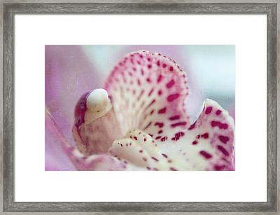 Framed Print featuring the photograph Cattleya Orchid Abstract 1 by Jenny Rainbow