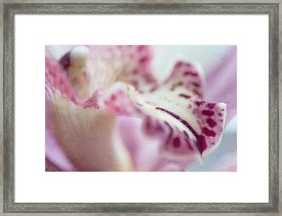 Framed Print featuring the photograph Cattleya Orchid Abstract 4 by Jenny Rainbow
