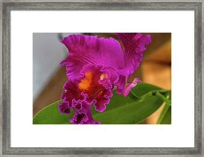 Cattleya Orchid Framed Print by Alana Thrower