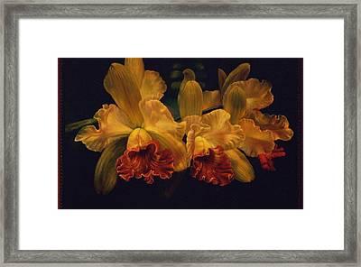 Cattleya Orchid Framed Print by Carolyn Sterling