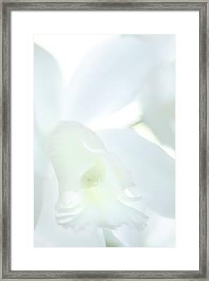 Cattleya Orchid #1 Framed Print
