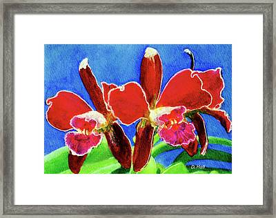 Cattleya Orchids Flowers #215 Framed Print by Donald k Hall