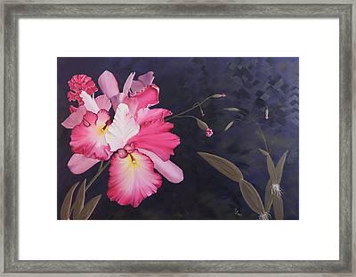 Cattleya Framed Print by Stephen Daddona