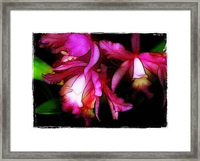 Cattleyas Framed Print by Judi Bagwell
