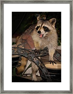 Caught Framed Print by DigiArt Diaries by Vicky B Fuller
