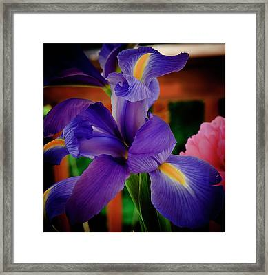 Caught In The Act Framed Print by Michael Putnam