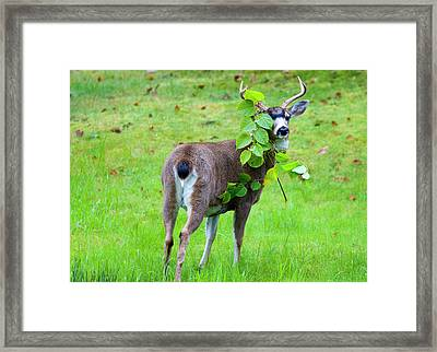 Caught In The Act Framed Print by Mike  Dawson