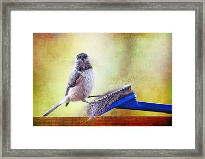 Caught In The Act Framed Print by Trina  Ansel