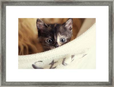 Framed Print featuring the photograph In The Hamper by Amy Tyler