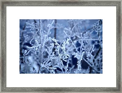 Caught In The Ice Framed Print by Jennilyn Benedicto