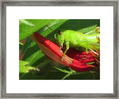 Caught In The Sun Framed Print by Loretta Pokorny