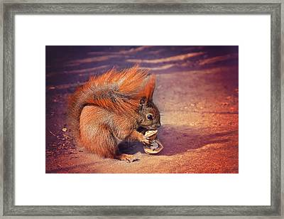 Caught Red Handed Framed Print