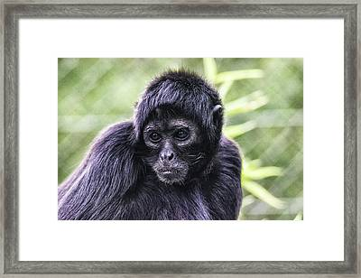 Caught Red Handed Framed Print by Martin Newman