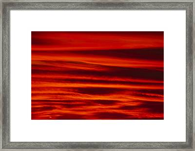 Caught Up Framed Print by Soli Deo Gloria Wilderness And Wildlife Photography