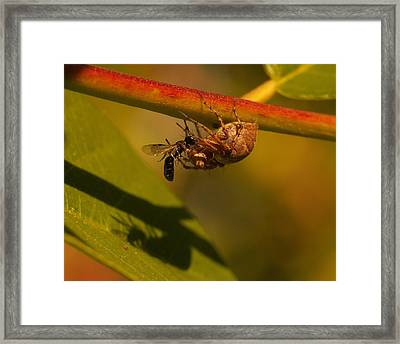 Caught Framed Print by William Stacy