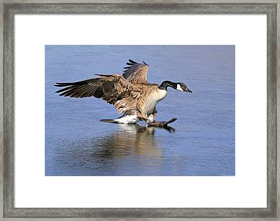 Caution - Ice Is Slippery Framed Print by Donna Kennedy