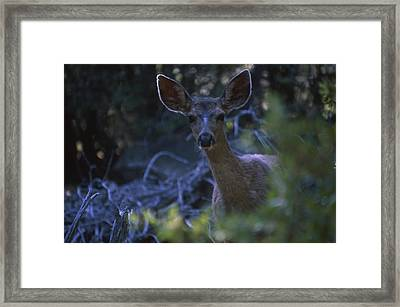 Cautious Curiosity  Framed Print by Soli Deo Gloria Wilderness And Wildlife Photography