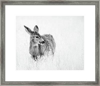 Mule Doe Framed Print