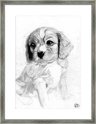 Cavalier King Charles Spaniel Puppy 2 Framed Print by David Smith
