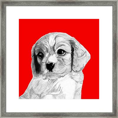 Cavalier King Charles Spaniel Puppy In Red Framed Print by David Smith