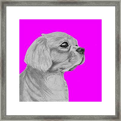 Cavalier King Charles Spaniel With Pink Background Framed Print by David Smith