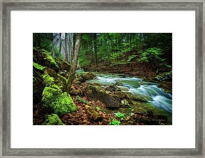 Cave Branch #15 Framed Print