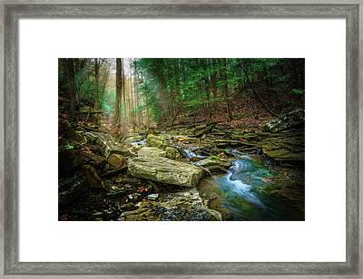 Cave Branch #9 Framed Print
