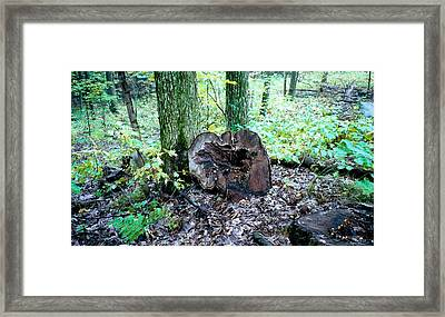 Cavity Framed Print by Tom Hefko