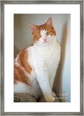 Cecil... Framed Print by Nina Stavlund