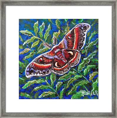 Cecropia Moth Framed Print by Gail Butler
