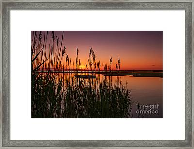 Cedar Beach Sunset In The Reeds Framed Print