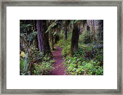 Framed Print featuring the photograph Cedar Creek Trail #3 by Ben Upham III