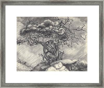 Cedar Dancing On The Eastern Peak Framed Print