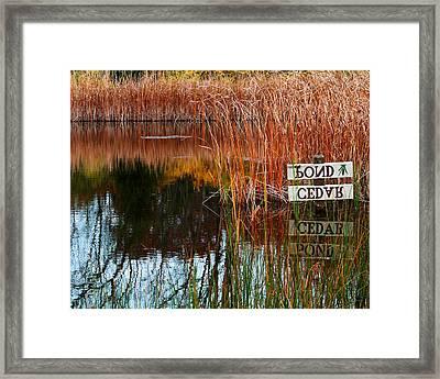 Cedar Pond Framed Print by Robert Clayton