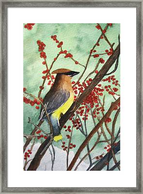 Cedar Wax Wing Framed Print by Sharon Farber