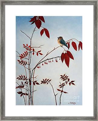 Cedar Waxwing Framed Print by Laura Tasheiko