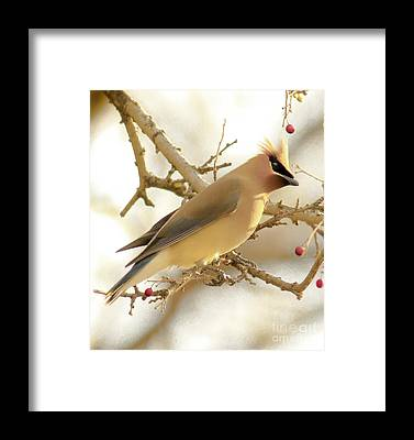 Cedar Waxing Framed Prints