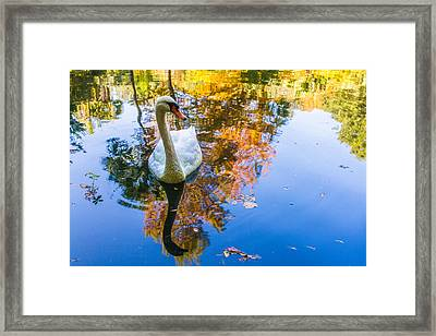 Cedar Woods Gardens 5 Framed Print by Gestalt Imagery