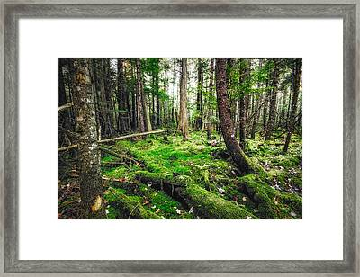 Framed Print featuring the photograph Cedar Woods by Robert Clifford