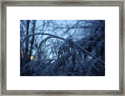 Cedars Of Ice Framed Print