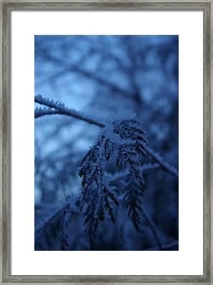 Cedars Of Ice II Framed Print