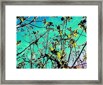 Celebrating The Spring Framed Print by Don Pedro De Gracia