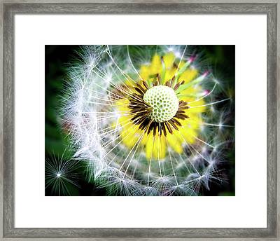 Celebration Of Nature Framed Print